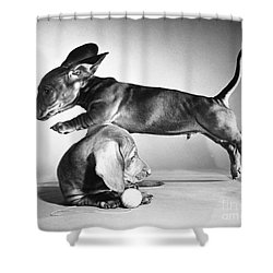 Dachshund Puppies Playing Shower Curtain by ME Browning