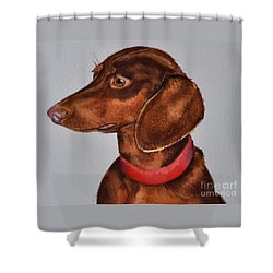Dachshund Watercolor Painting Shower Curtain
