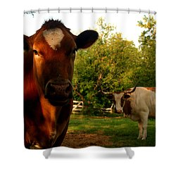Dads Cows Shower Curtain