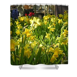 Daffidoils Shower Curtain