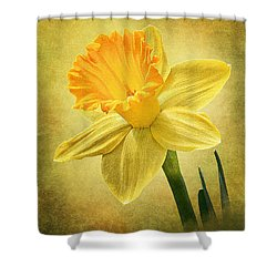 Daffodil Shower Curtain by Ann Lauwers