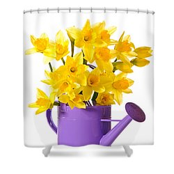Daffodil Display Shower Curtain by Amanda Elwell