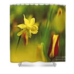 Daffodil Shower Curtain by Heiko Koehrer-Wagner
