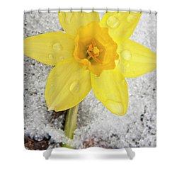 Daffodil In Spring Snow Shower Curtain by Adam Romanowicz