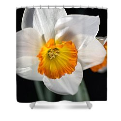 Daffodil In White Shower Curtain by Joy Watson