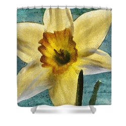 Daffodil Shower Curtain by Jeff Kolker