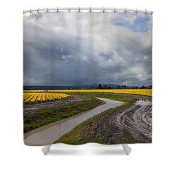 Daffodil Lane Shower Curtain by Mike  Dawson