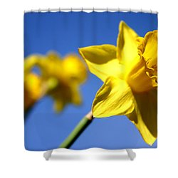 Daffodil Line Shower Curtain by Sarah OToole