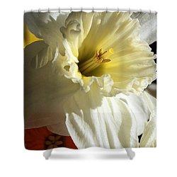 Daffodil Still Life Shower Curtain by Kenny Glotfelty