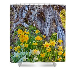 Daffodils And Sculpture Shower Curtain by Omaste Witkowski