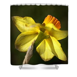 Shower Curtain featuring the photograph Daffodils Grace by Joy Watson