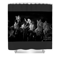 Daffodils In Black And White Shower Curtain