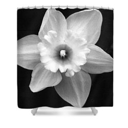 Daffodils - Infrared 01 Shower Curtain by Pamela Critchlow