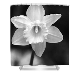 Daffodils - Infrared 10 Shower Curtain by Pamela Critchlow