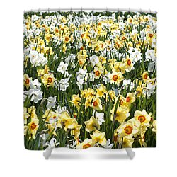 Daffodils Shower Curtain by Lana Enderle