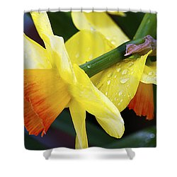 Shower Curtain featuring the photograph Daffodils With Rain by Joe Schofield
