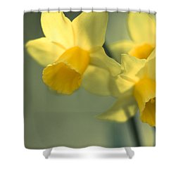 Daffy-down-dilly  Shower Curtain