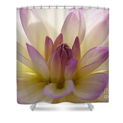 Shower Curtain featuring the photograph Dahlia 1 by Rudi Prott