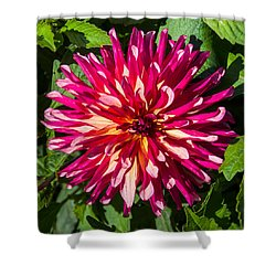 Dahlia 2 Shower Curtain