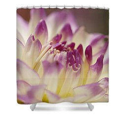 Shower Curtain featuring the photograph Dahlia 2 by Rudi Prott