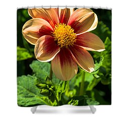 Dahlia 4 Shower Curtain
