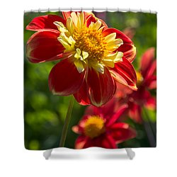 Dahlia 5 Shower Curtain