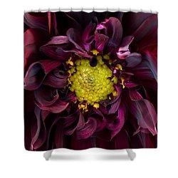 Dahlia - A Study In Crimson Shower Curtain