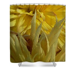 Shower Curtain featuring the photograph Dahlia Dew Yellow by Susan Garren