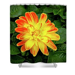 Dahlia Shower Curtain by Ed  Riche