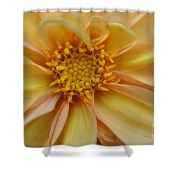 Dahlia  Shower Curtain by Elaine Manley
