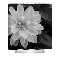 Dahlia Shower Curtain by Ellen Henneke