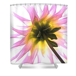 Dahlia Flower Shower Curtain by Joy Watson