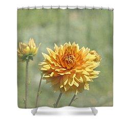 Dahlia Flowers Shower Curtain by Kim Hojnacki