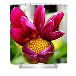 Shower Curtain featuring the photograph Dahlia From The Showpiece Mix by J McCombie