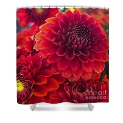 Shower Curtain featuring the photograph Dahlia In Red by Arlene Carmel