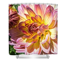 Shower Curtain featuring the photograph Dahlia by Kate Brown