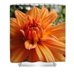 Shower Curtain featuring the photograph Dahlia by Kristine Merc