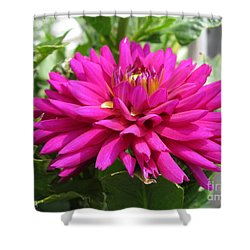 Shower Curtain featuring the photograph Dahlia Named Andreas Dahl by J McCombie