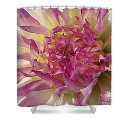 Shower Curtain featuring the photograph Dahlia Named Angela Dodi by J McCombie