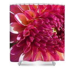 Shower Curtain featuring the photograph Dahlia Pink 1 by Susan Garren