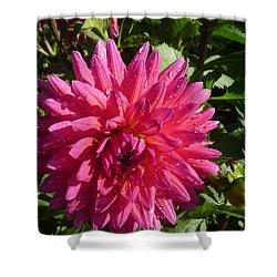 Dahlia Pink Shower Curtain by Susan Garren