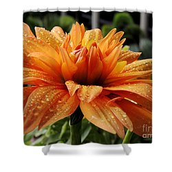 Shower Curtain featuring the photograph Dahlia Raindrops by Kristine Merc