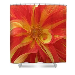 Dahlia Unfurling In Yellow And Red Shower Curtain