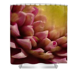 Dahlia Up Close Shower Curtain by Michael McGowan