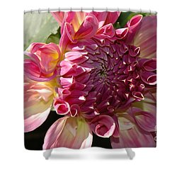 Dahlia V Shower Curtain