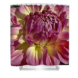 Dahlia Vii Shower Curtain