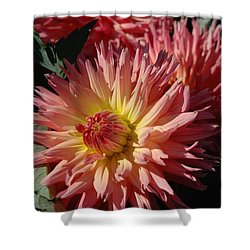 Dahlia Viii Shower Curtain
