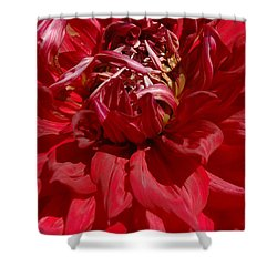 Dahlia Viiii Shower Curtain