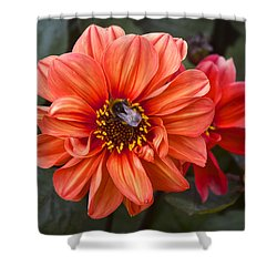 Dahlia With Bee Shower Curtain by Venetia Featherstone-Witty