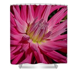 Dahlia X Shower Curtain